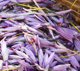 Abruzja – szafran i winogrona.