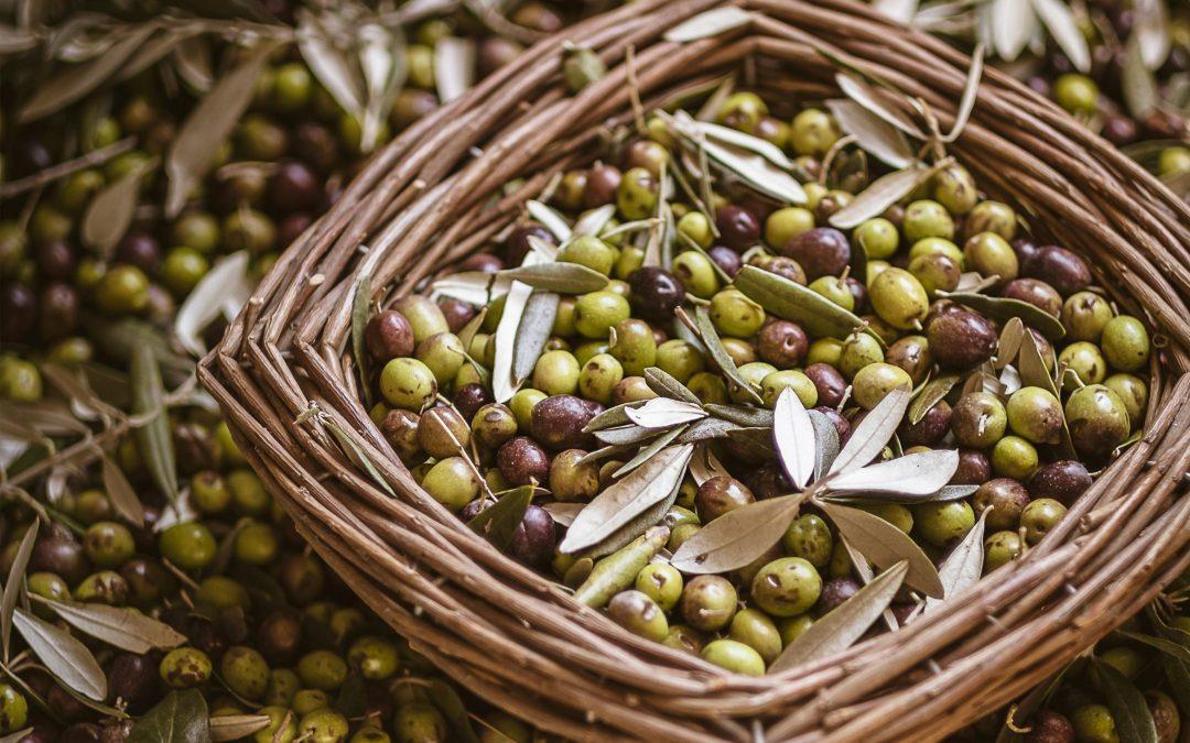 10 powodów, dla których warto jeść oliwki.